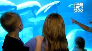 Manatee Rescue Family Gets Tour of Manatee Springs - Cincinnati Zoo