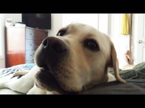 Dog wakes owner