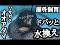 【亀 屋外飼育】亀の飼い方 亀水槽水換え クサガメの巻