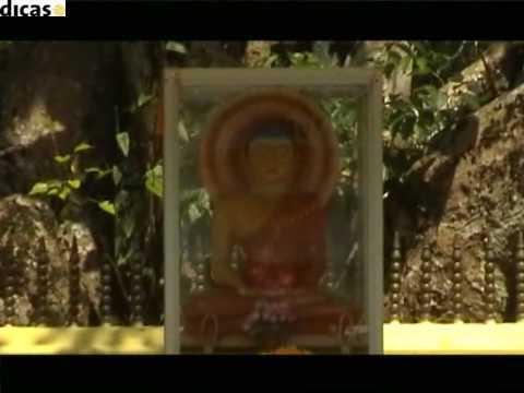 Amarasiri peiris- Sitha Pura mal pipena wasanthaya