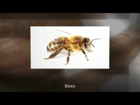 Berrett Pest Control Houston Call 214 242 4800