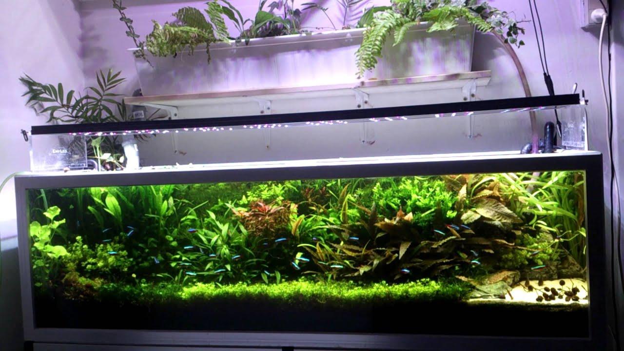 Oświetlenie W Akwarium Poradnik Dla Początkujących