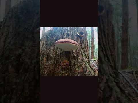 mushroom hunting on the Oregon coast
