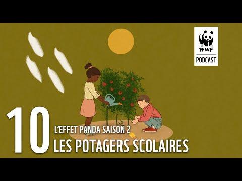 Les potagers scolaires | L'Effet Panda saison 2 : un podcast WWF