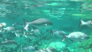 小笠原諸島、兄島海中公園、キャベツビーチでシュノーケル 2013年9月10...