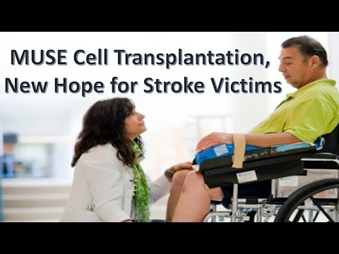 Stem Cells Offer New Aspire to Stroke Survivors