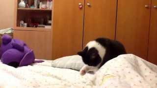 Мой кот ложится спать