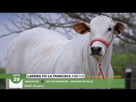 Lote 29 Ladeira FIV Francisca