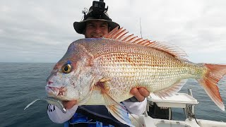 Summer Snapper: Fishing on a 'Low' fish activity day