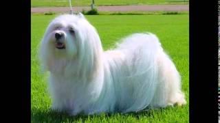 корм для собак екатеринбург