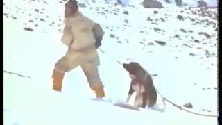 Antartica 1983 super  Film en francais