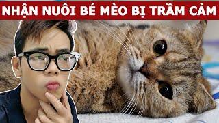 30 ngày nhận nuôi bé mèo bị trầm cảm (Oops Banana Vlog #94)
