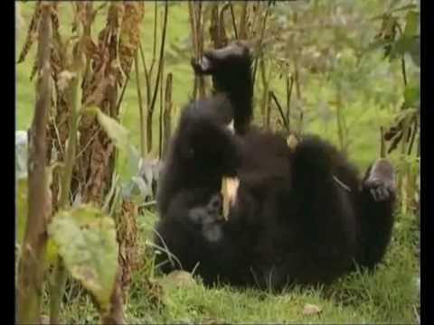 Sir David Attenborough on Fauna & Flora International and the IGCP