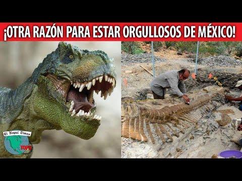 Los Dinosaurios de México, la otra riqueza histórica que pocos conocen