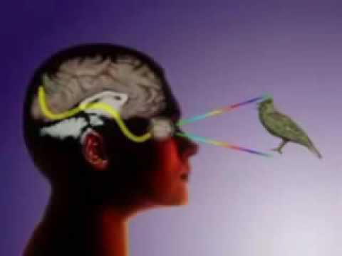 Как воспринимает окружающий мир наш мозг. Иллюзия мира