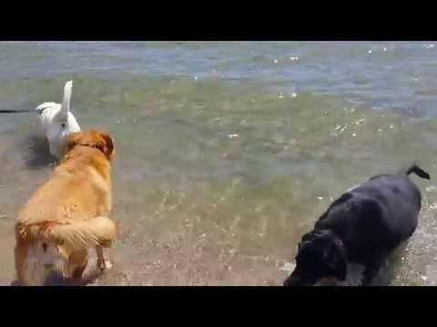 Annie, Molly, and Sammi Swimming in Lake Michigan 1