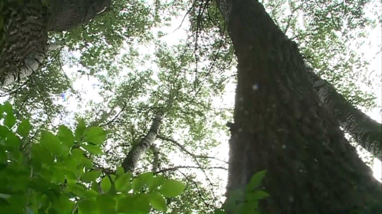 Mártély ártéri erdő