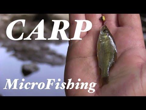 Carp MicroFishing In Indiana
