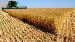 Top 10 Largest Wheat Producing Countries In The World