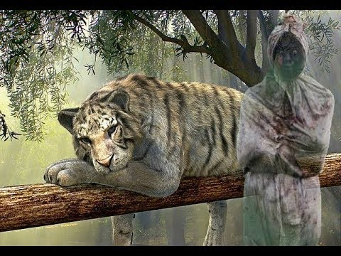 Mati Nya Sang Pemilik Khodam Harimau Putih Youtube