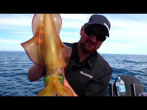 CRAZY SQUID EGI FISHING - YouFishTV