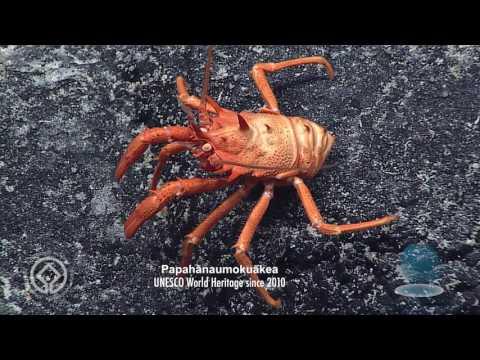 Explore spectacular Papahānaumokuākea marine World Heritage site III