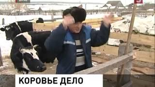 Ульяновский фермер выиграл суд против коров (25.02.2013)
