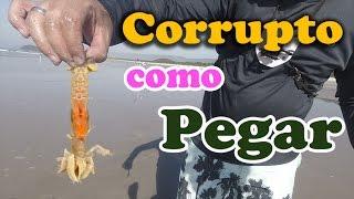 Dica Rápida: Como pegar corrupto na praia - Dicas de ISCA NATURAL  para PESCA de PRAIA