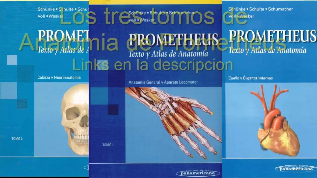Descargar libros de texto y atlas de anatomia de Prometheus en PDF ...