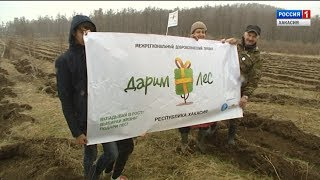 В Хакасии за один день высадили сто шестьдесят тысяч деревьев. 22.05.2018