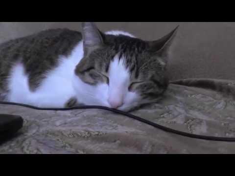 Музыка для кошек. Практикум. Music for Cats. Cat sleep after music