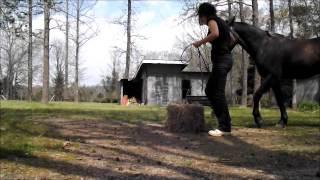 4-9-13 - Chrome Hay Bale Stifle Exercise