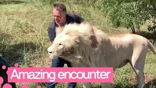 Tourists Have Close Encounter With Pride Of Rare White Lions