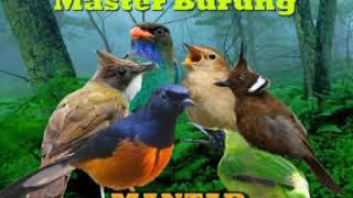 Master Burung Mantaps  (Murai, Cucak Ijo, Cililin, Jenggot, Nightingale, Tengkek)