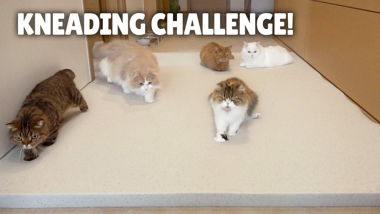 Kneading Challenge! Cats on a Memory Foam Mat!   Kittisaurus