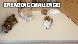 Kneading Challenge! Cats on a Memory Foam Mat! | Kittisaurus