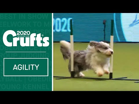 Agility  Crufts Singles Final: Small, Medium and Large (Agility) | Crufts 2020