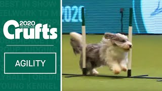 Agility – Crufts Singles Final: Small, Medium and Large (Agility) | ​Crufts 2020