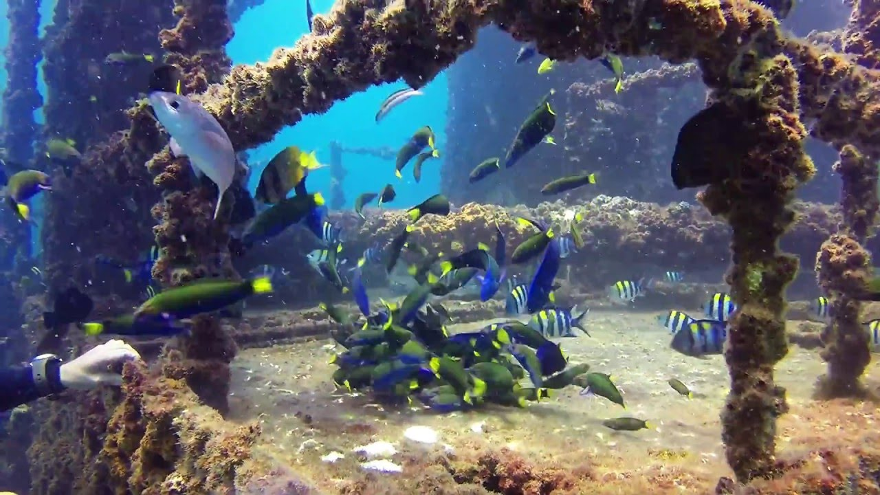 Diving The Ex-HMAS Brisbane