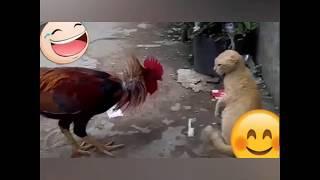Komik Videolar Vineler Sizler için hayvanların Çok Komik Videolarını Derledik Hayvan Belgeseli movie