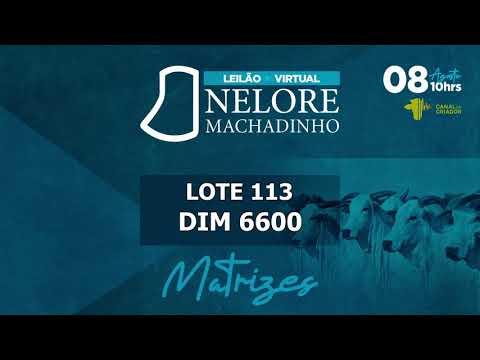 LOTE 113   DIM 6600