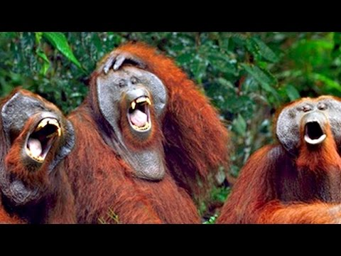 Thumbnail: You can TRY NOT TO but YOU WILL LAUGH - The BEST MONKEY videos