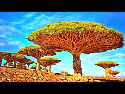 14 Bizarre Unique Trees