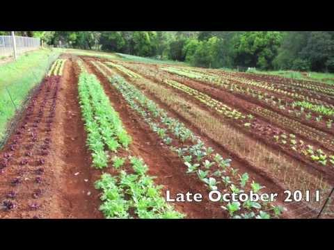 Mt. Tamborine Organic Garden - a brief history