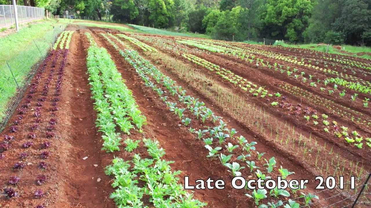 Mt. Tamborine Organic Garden   A Brief History
