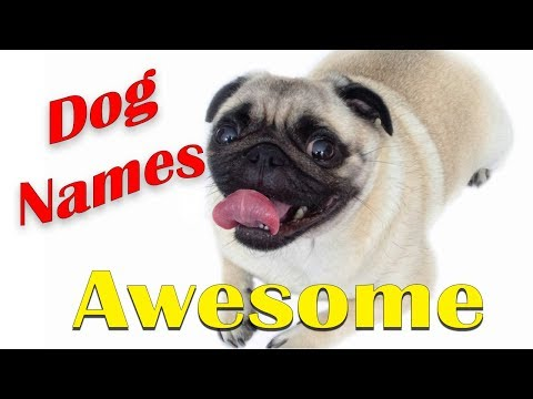 🐶 BEST DOG NAMES 2018 Awsome Coolest DOG NAMES (Puppy Names) VOTE FOR YOUR FAVORITE 👈