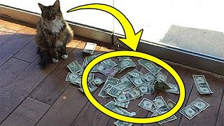 Cat brought a lot of money every day! People were shocked to learn where he got it from!