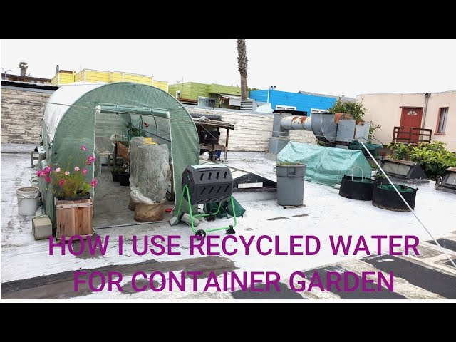 How I Conserve Water for Container Garden in San Francisco