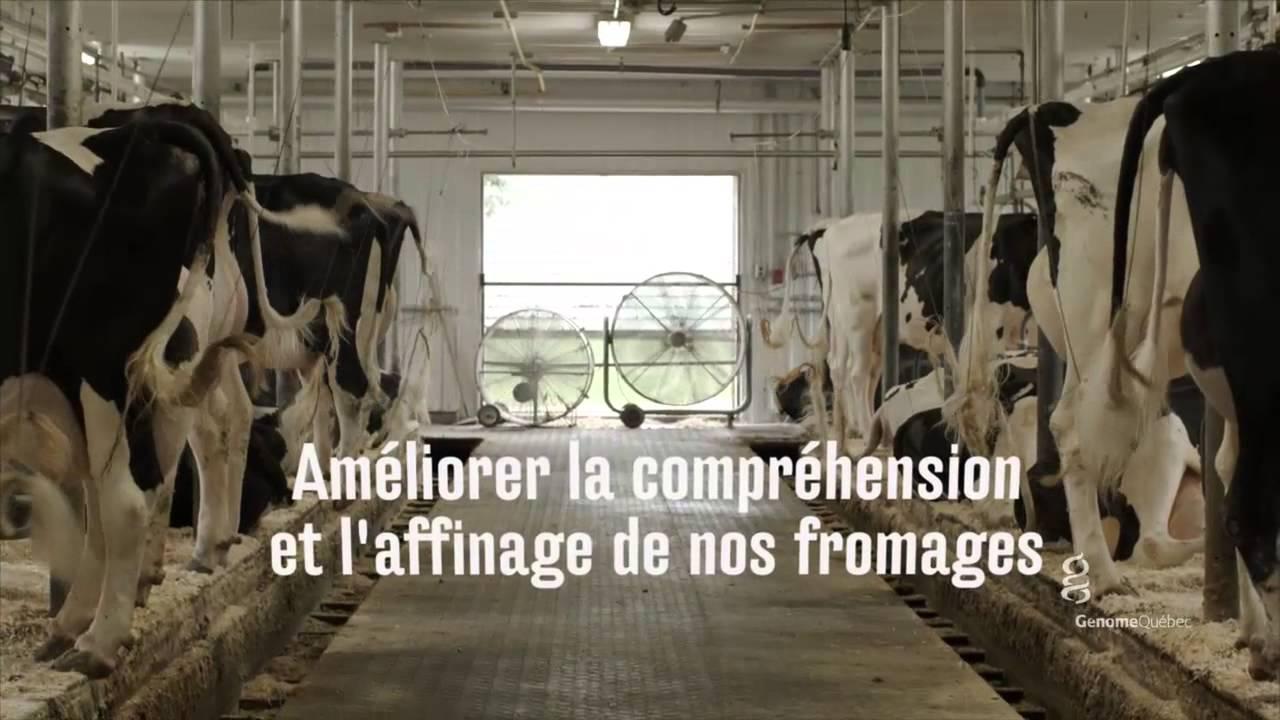 La génomique, nouvelle alliée des fromagers