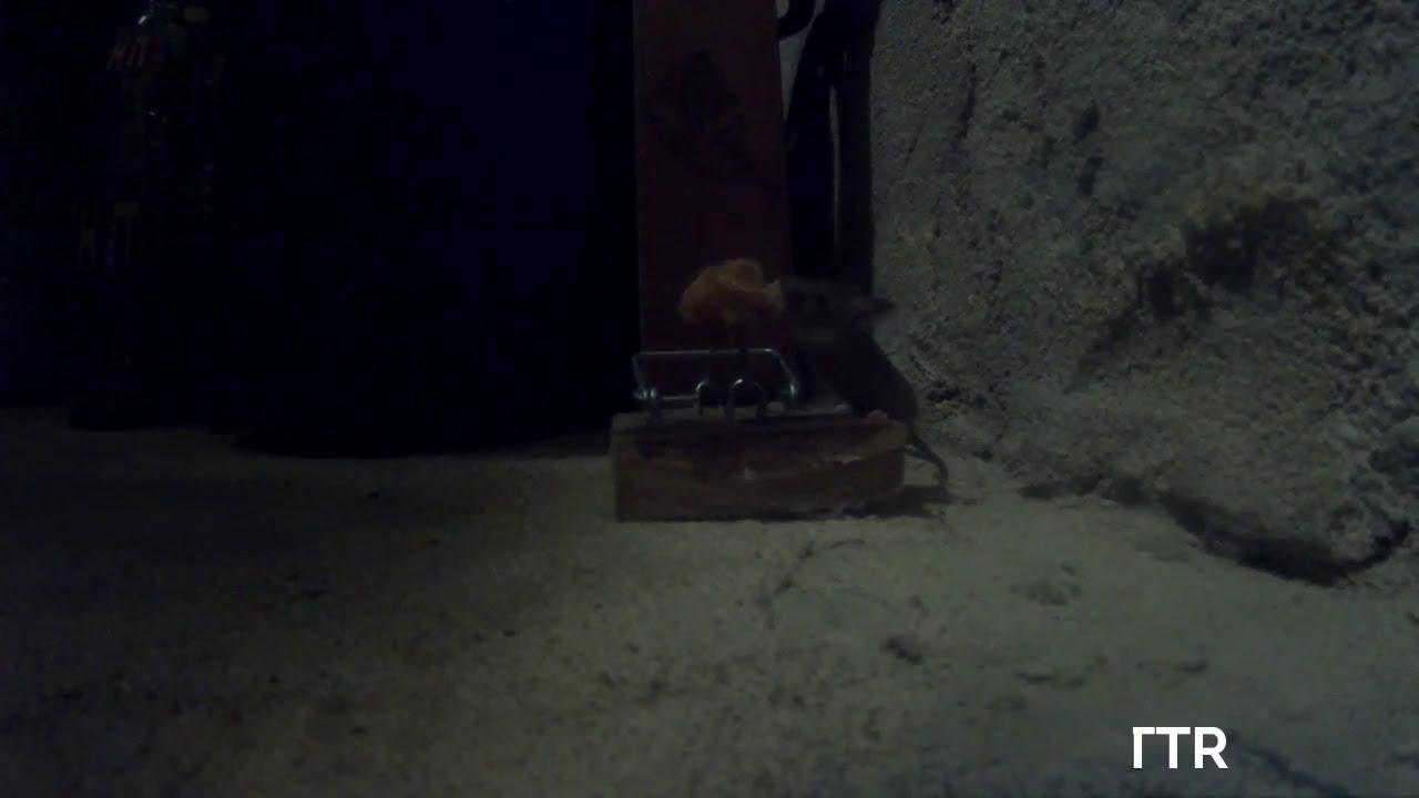 Como cazar ratones 😀 😀 - YouTube